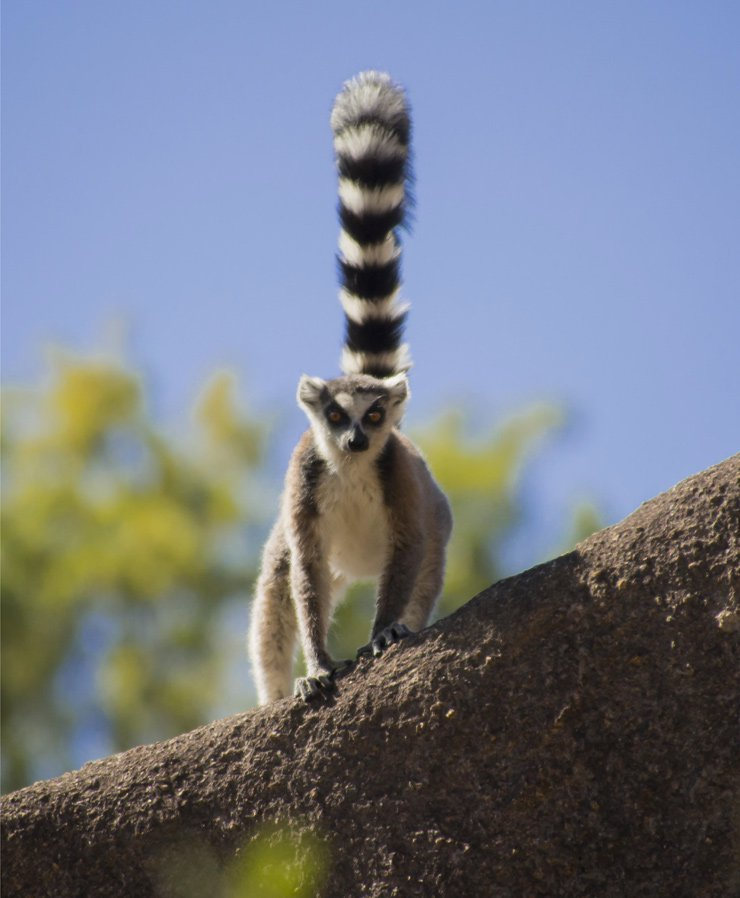 Madagascar cycling tours